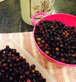 concord grapes - stemmed